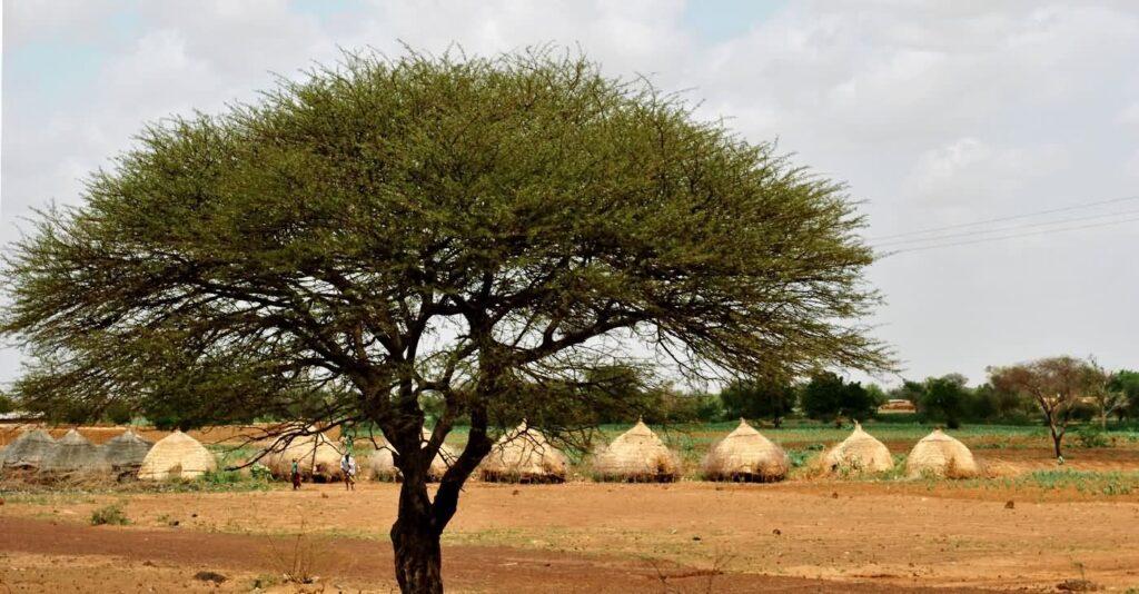 Die typischen Kleinviehställe und Vorratshütten in der Gegend von Zinder